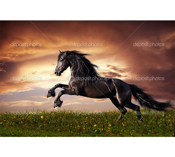 depositphotos_13208945-Black-friesian-horse-gallop