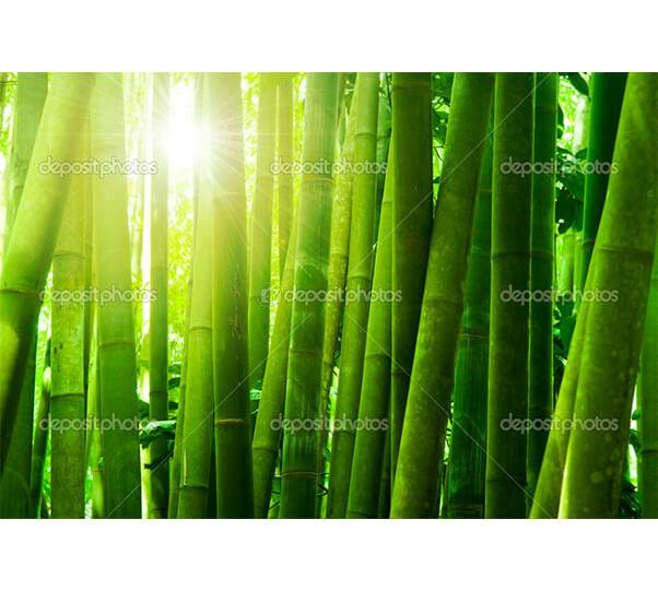 depositphotos_1975626-Bamboo-forest
