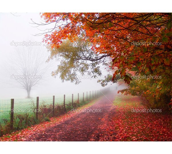 depositphotos_2369054-Misty-autumn-morning-trees