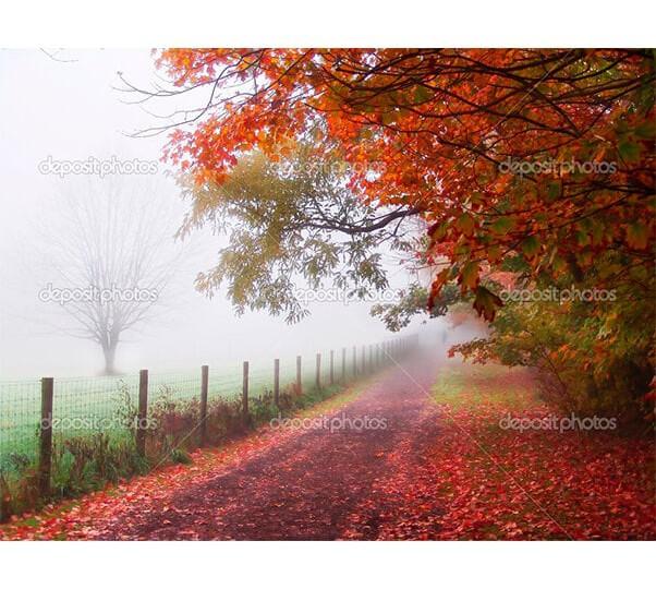 depositphotos_2369054-Misty-autumn-morning-trees