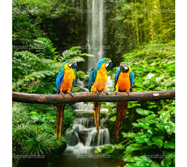 depositphotos_25476371-Blue-and-yellow-macaw