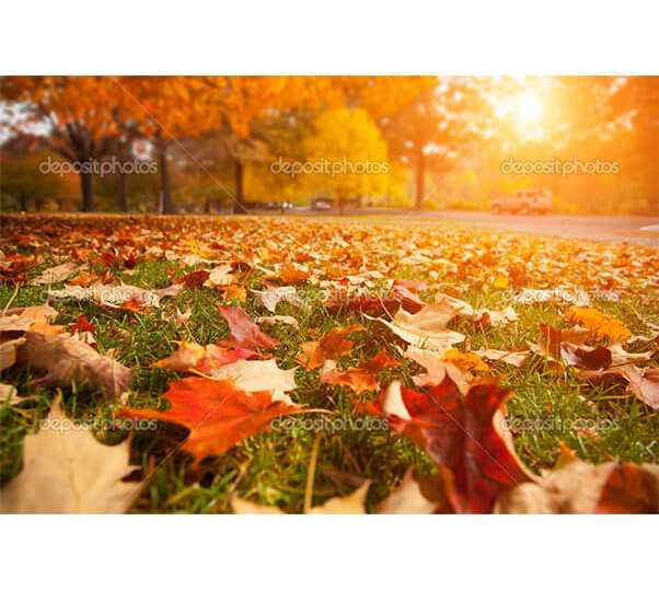 depositphotos_32426959-Autumn-park