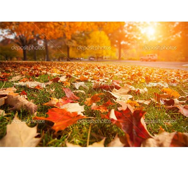 depositphotos_32426959-Autumn-park