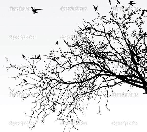 depositphotos_3689167-Branches