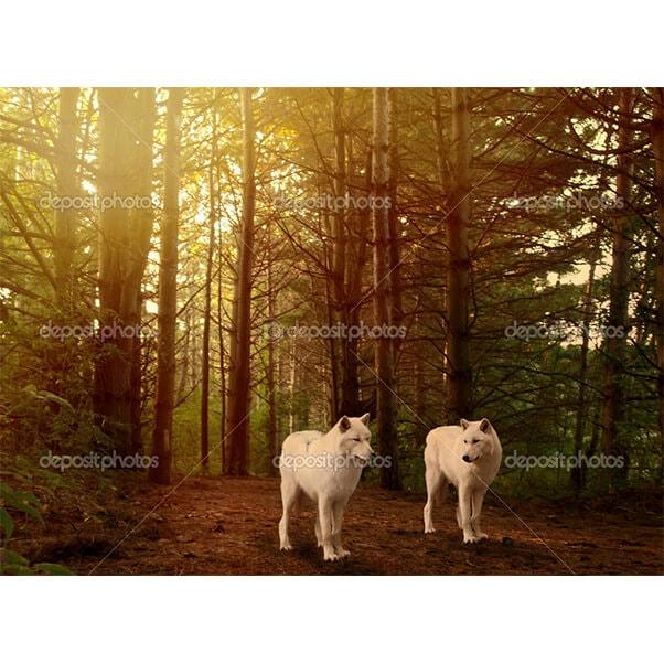 Животные 37760337