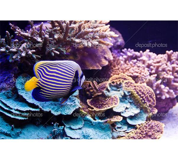 depositphotos_4371724-Underwater-scene