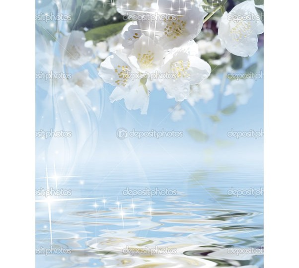 depositphotos_4793936-Magical-background-a-blooming-jasmine