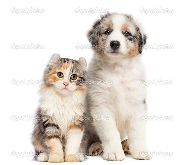 depositphotos_49124193-Kitten-and-puppy-sitting-isolated