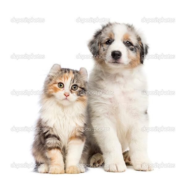 Животные 49124193