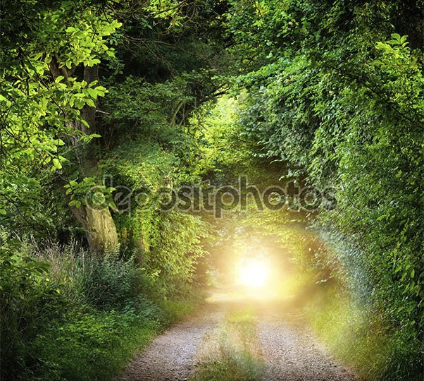 depositphotos_70084353-Tunnel-of-trees-leading-to