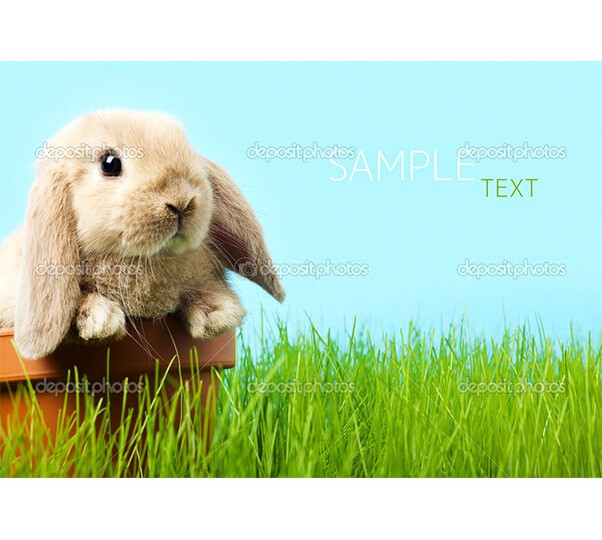 depositphotos_9927186-Easter-bunny